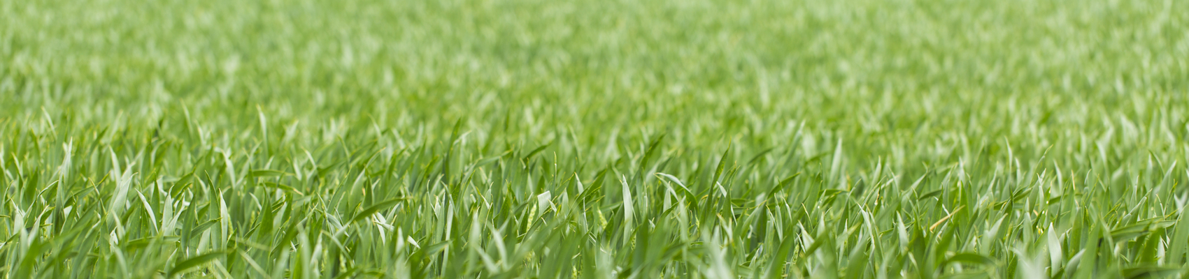 grassslide
